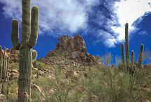 Arizona Desert / Photography from Phoenix, AZ