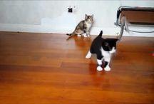 Rescue Felines & Volunteers