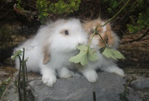 My rabbits: Mojito & Daikiry