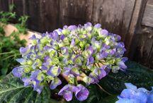 Easy garden plants for beginners