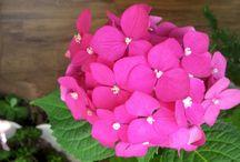 My home plants♡♡♡