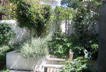 London Garden / by Nye Forbes Stenning