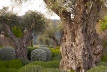 Gardens & Vistas / by TM Wells
