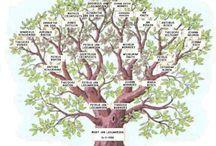 Family tree / Stamboom van Leeuwarden