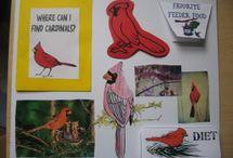 Bird info.