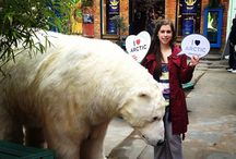 Greenpeace's 'Save the Arctic' Campaign / Paula Bear was in town for Earth Day! On Monday 22nd April she visited us at Neal's Yard in Covent Garden to pose for photos with her adoring fans, and raise awareness of Greenpeace's 'Save the Arctic' campaign, encouraging people to sign the petition to ban offshore drilling around the North Pole. Check out these photos of Paula, and if you fall in love with her as much as we did, please follow this link and add your name to Greenpeace's very worthwhile petition. http://www.savethearctic.org/