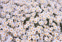 Flower / floweef