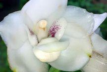 orquideas / orchids