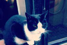 Gatti di insolitamsterdam #amsterdam / I gatti più simpatici di #amsterdam... Sono loro i veri proprietari delle case di Amsterdam