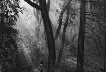Sous-bois, forêts, en noir et blanc.