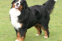 Nuestro Perro