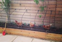 hønsegårde/hønsehuse