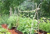 Veggie/herb garden