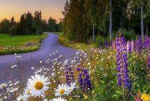 My Finland