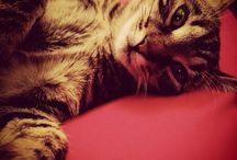Pasta Flora / My cat's life