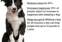 DOG FUN FACTS / Natural Dogtails - Great for your dog's fur, mentality, and our Earth. www.DogtailsShop.com