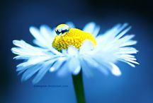 Photography: Macro / Amazing macro photography / by Inspiration Exhibit