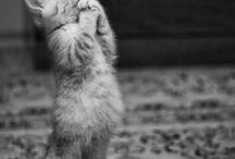 Animals / by Mary Ruiz-Rockwell