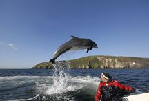 Ireland / Top things to do