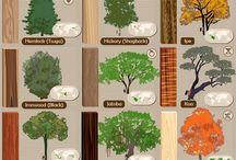 木のいろいろ