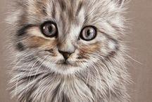dekopaj kedi