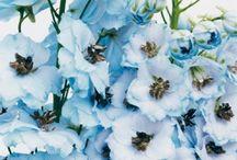 Bloemen Delphinium