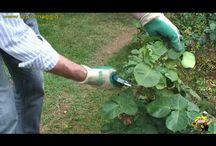 potatura fiori e piante