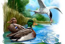 Nature Illustrations - Luontoaiheisia kuvituksia / Heikin Kuvituspajan luontoaiheisia kuvituksia  Heikki Väyrynen's Illustrations of nature and animals.