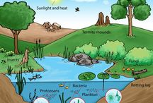 Ecosystem / An Ecosystem includes all living things in an area, interacting with each other and with the environment.