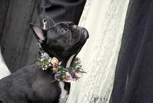 Wedding frenchies!