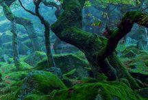 Natur und fantasy
