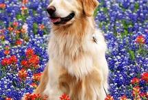 Bluebonnet Pets