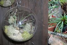 INDOOR GARDENING WITH AIR PLANTS