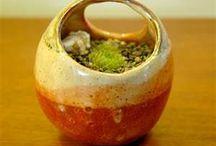 Ceramics and succulents
