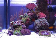 - Salt water Inspiration / - Salt water aquarium - Small salt tank - Color and great fish - Nano