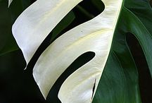 Nature motif