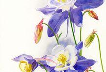 Art: Watercolor Flowers 6 / by Sharon Petersen