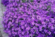 flores de suelo