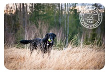 Dog A Day for Canine Cancer, By Bailey & Banjo / by Ali Hankins