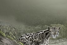 Mammals Illustraciencia