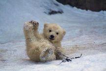 Polar bears are the cutest animals
