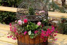 Terrariums,Plants,Gardens,Flower... / by AuFlu Uramphakorn