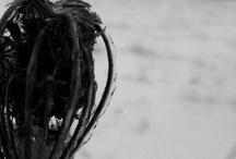 My Photography