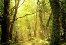 Natur pur/ Landschaft,Wald...
