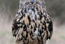 Birding / Birding