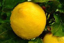 Gardening / Lemon