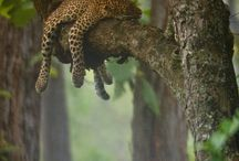 Wildlife / by Laura Victoria