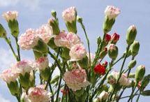 flores varios