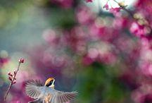 Birds / Cute birdie pics / by Sammy the cat