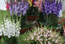 Garden flowers and plants / Potted plants and flowers for small gardens and terraces